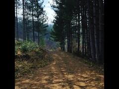 forest_Halkidiki