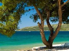 Pine tree on the beach