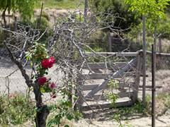 Crete_Lassiti_68