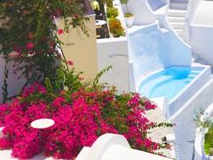 Санторини, Цветы