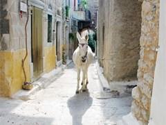 Осел в узком переулке деревни на греческом острове Хиос