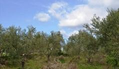 Land 3600 m² in Kassandra, Chalkidiki