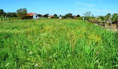 Działka 1200 m² na Kassandrze (Chalkidiki)