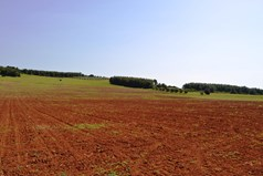 Land 12438 m² in Kassandra, Chalkidiki