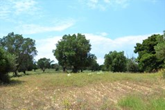 Land 11500 m² in Kassandra, Chalkidiki