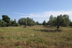Land 6000 m² in Sithonia, Chalkidiki