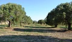 Land 7800 m² auf Kassandra (Chalkidiki)
