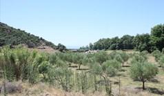 Γή 8000 τ.μ. στη Σιθωνία