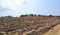 Γή 40000 τ.μ. στην Κασσάνδρα