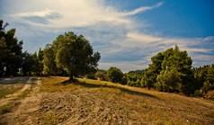 Land in Kassandra, Chalkidiki