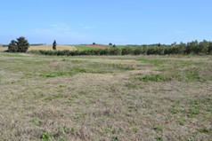Land 6375 m² in Kassandra, Chalkidiki