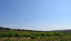 Land 5100 m² in Kassandra, Chalkidiki