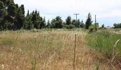 Land 1677 m² auf Kassandra (Chalkidiki)