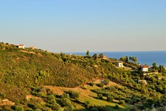 Land 14955 m² in Kassandra, Chalkidiki