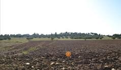 Γή 10000 τ.μ. στην Κασσάνδρα