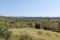 Land 13000 m² in Kassandra, Chalkidiki