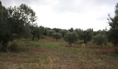 Arsa 10800 m² Sithonia'da (Chalkidiki)