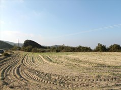 Land 6350 m² in Kassandra, Chalkidiki
