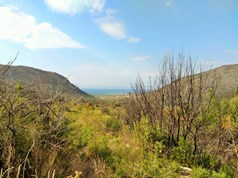 Land 7200 m² on the island of Thassos