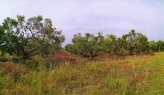 地皮 5330 m² 位于新马尔马拉斯(哈尔基季基州)