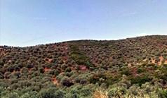 Land 15000 m² in Athos, Chalkidiki