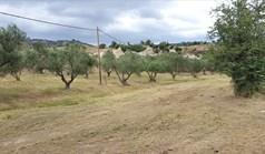 Terrain 5500 m² à Sithonia (Chalcidique)