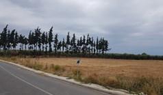 Działka 10000 m² na Kassandrze (Chalkidiki)