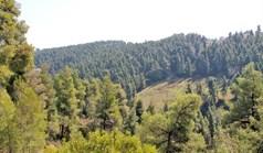 地皮 4050 m² 位于卡桑德拉(哈尔基季基州)