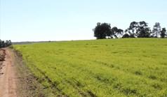 Zemljište 103500 m² na Kasandri (Halkidiki)