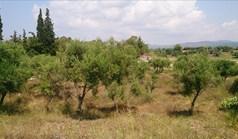 Terrain 15099 m² à Sithonia (Chalcidique)