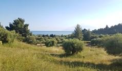 Działka 4500 m² na Kassandrze (Chalkidiki)