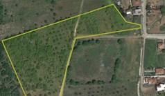 Land 16500 m² in Western Peloponnese