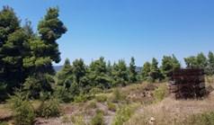Arsa 11000 m² Kassandra'da (Chalkidiki)