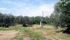 地皮 4700 m² 位于萨索斯岛
