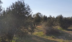 Land 1000 m² in Chalkidiki