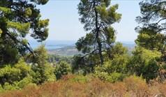 Zemljište 16000 m² na Kasandri (Halkidiki)