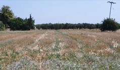 Земельна ділянка 4551 m² в Халкидіках