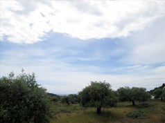 Land 4300 m² on the island of Thassos