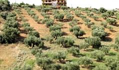 Земельный участок 9000 м² на Ситонии (Халкидики)