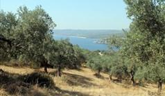 Terrain 10000 m² à Athos (Chalcidique)