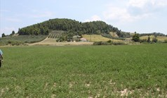 Land 8000 m² auf Kassandra (Chalkidiki)