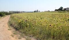 Zemljište 6800 m² na Kasandri (Halkidiki)