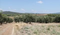 Земельный участок 6915 м² на Ситонии (Халкидики)