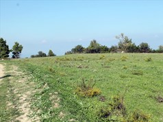 Land 7000 m² in Kassandra, Chalkidiki