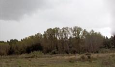 Zemljište 65000 m² na Kasandri (Halkidiki)