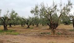 Land 12500 m² in Sithonia, Chalkidiki